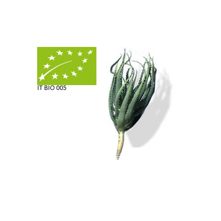 Organic Aloe Arborescens Plant without root
